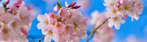 Familia Olfativa Floral